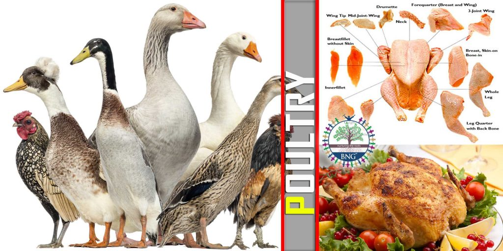 various types of Poultry & Cooking
